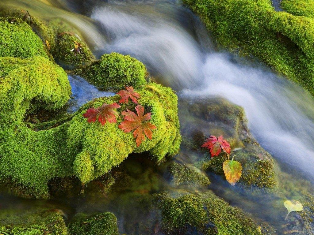 fotos-de-musgo-hojas-agua